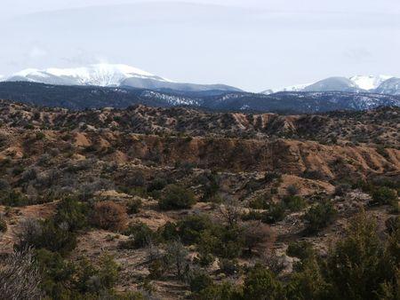 rocky mountain juniper: Hot Below, Cold Above