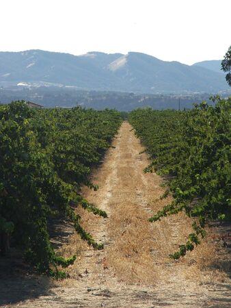wine road: The Vineyards Golden Road