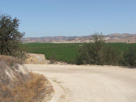 wine road: Vineyard Secluded