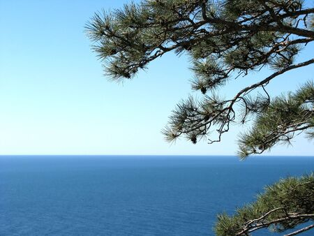 horizont: Blue sky and pine Stock Photo