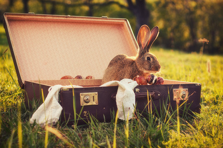 Vintage style photo from a bunny in a suitcase