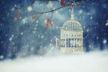 snowfall: Bird Cage in snowfall Stock Photo