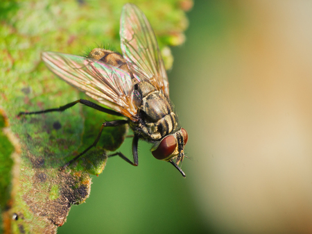 ugliness: Macro photos from the fly Stock Photo