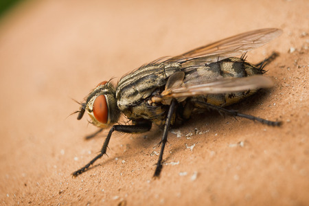 spiked hair: Macro photos from the fly Stock Photo