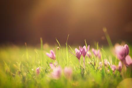 석양에 꽃