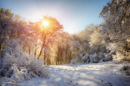 rime frost: winter landscape Stock Photo