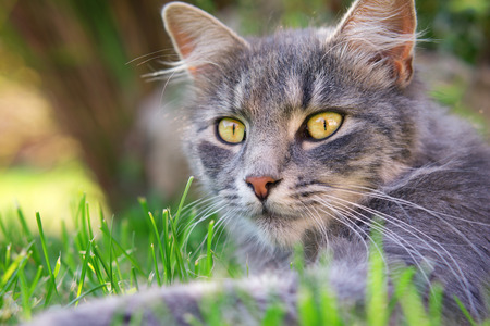 perceive: cute cat