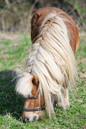 조랑말은 작은 말이다.