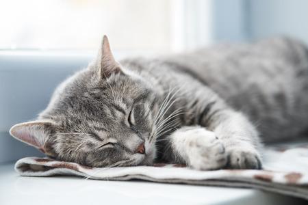 Domestic cat sleeping