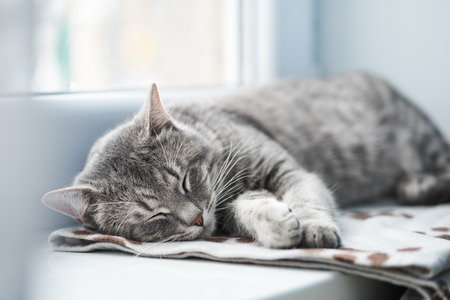 Domestic cat sleeping