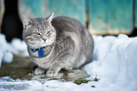 Beautiful domestic cat, outdoor at winter 스톡 콘텐츠