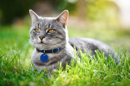 Outdoor photo of a beautiful domestic cat