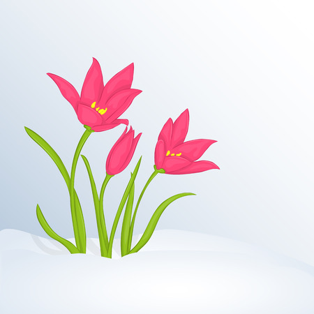 Beautiful spring background with Tulipa in snow .