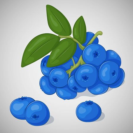 whortleberry: Bright juicy blueberry on grey background. Sweet delicious for your design in simple cartoon style. Vector illustration. Berries Collection. Illustration