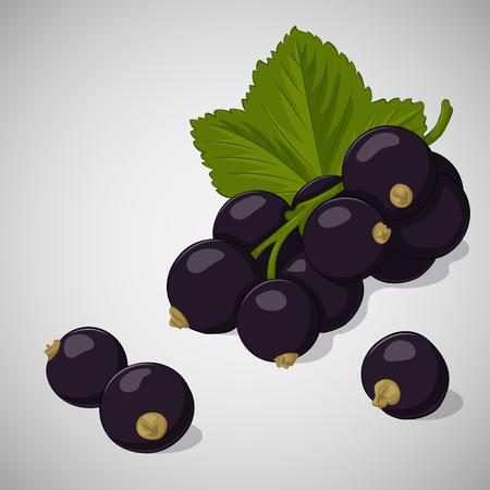 Helle saftige schwarze Johannisbeere auf grauem Hintergrund. Süßes köstliches für Ihr Design in der Karikaturart. Vektor-Illustration. Beeren-Sammlung.