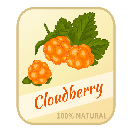 chicouté: Vintage label with cloudberry isolated on white background in cartoon style. Vector illustration. Berries Collection. Illustration