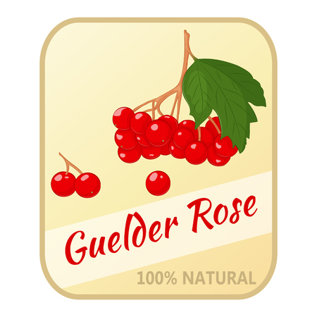 Vintage label with guelder rose isolated on white background in simple cartoon style. Vector illustration. Berries Collection. Illustration