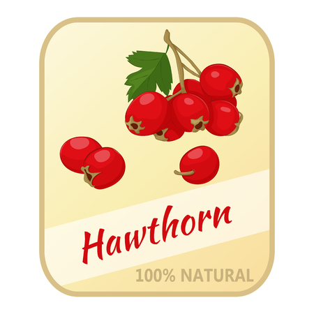 Vintage label with hawthorn isolated on white background in simple cartoon style. Vector illustration. Berries Collection.