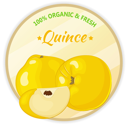 Vintage label with quince isolated on white background in cartoon style. Vector illustration. Fruit and Vegetables Collection.