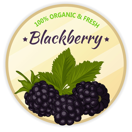 Vintage label with blackberry isolated on white background in cartoon style. Vector illustration. Fruit and Vegetables Collection. Reklamní fotografie - 81004685