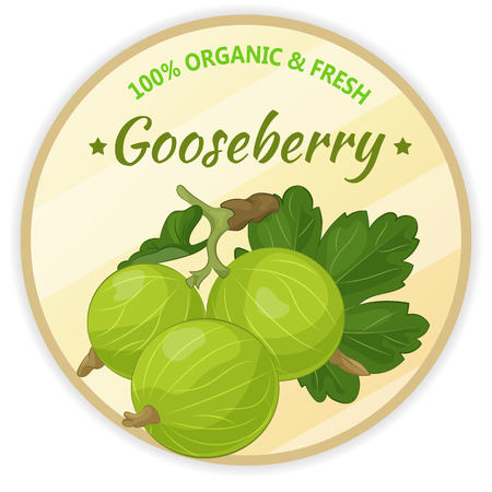 Vintage label with gooseberry isolated on white background in cartoon style. Vector illustration. Fruit and Vegetables Collection.