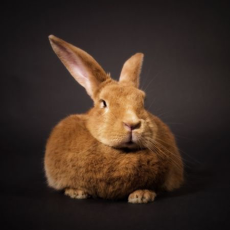 Bunny Stock Photo - 799214