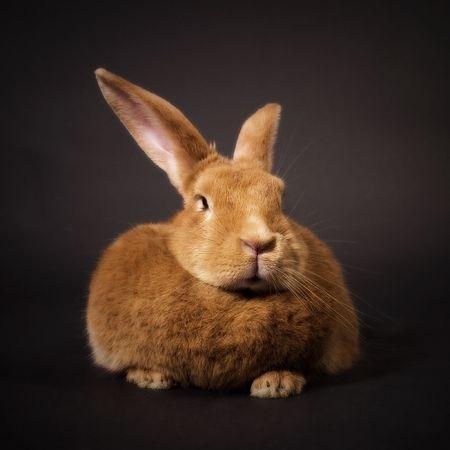 Bunny Stock Photo - 799214