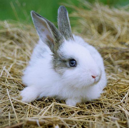 little rabbit Stock Photo - 834953