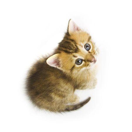 furry tail: Kitten