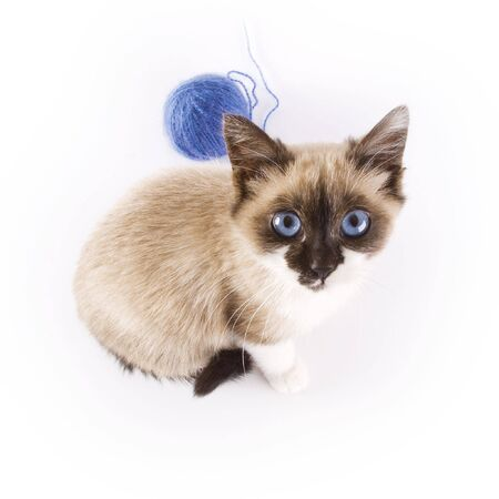 Young cat photo
