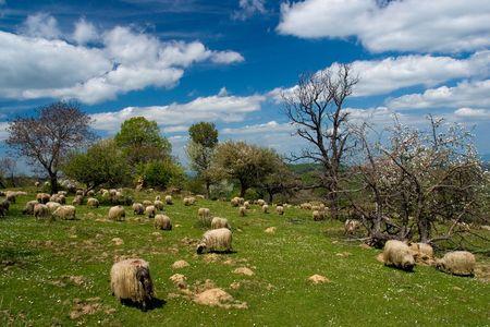 pastoral: Pastoral scene Stock Photo