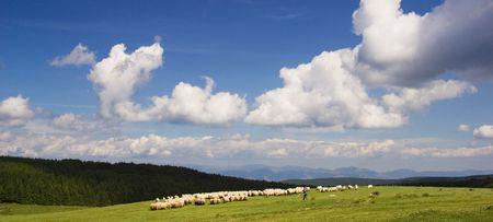 Pastoral scene photo