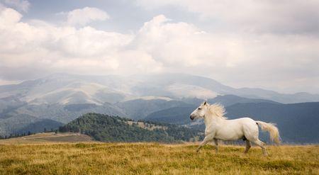 White horse Stock Photo - 3603188