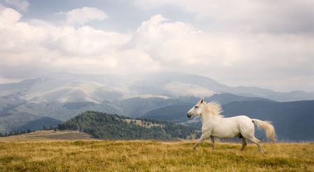 mustang horse: White horse