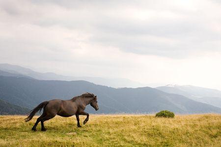 Stallion Stock Photo