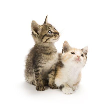 Kittens on white background Stock Photo