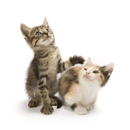 cat isolated: Kittens on white background Stock Photo