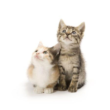 Kittens on white background Standard-Bild
