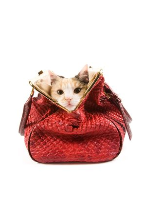 Cute kitten in a red bag photo