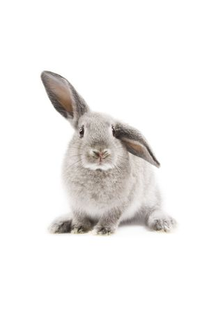 cute rabbit: Adorable conejo aislados sobre fondo blanco