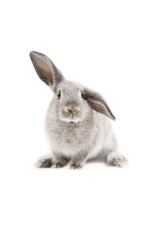 wit konijn: Adorable konijn geïsoleerd op een witte achtergrond