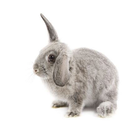 Adorable rabbit isolated on a white background photo