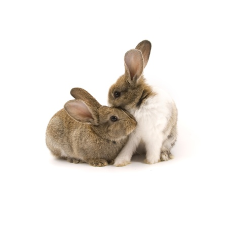 Two adorable rabbits isolated on a white background Stock Photo