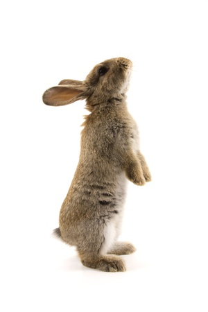 cute bunny: Adorable rabbit isolated on a white background