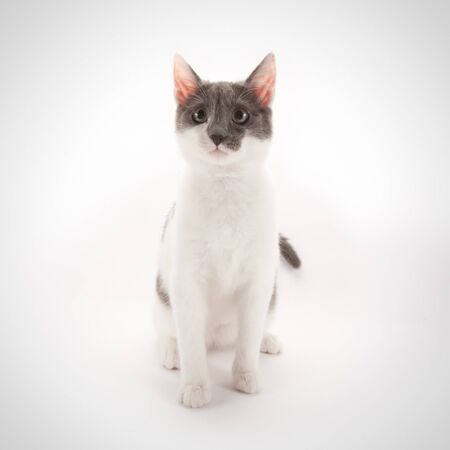 Cute cat on a white background Stock Photo - 13348000