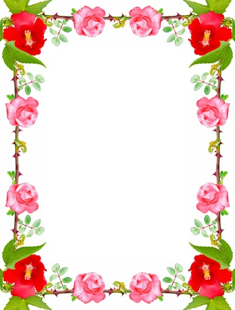 Beautiful frame made of roses on a white background photo