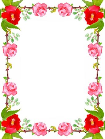 Mooi frame gemaakt van rozen op een witte achtergrond Stockfoto