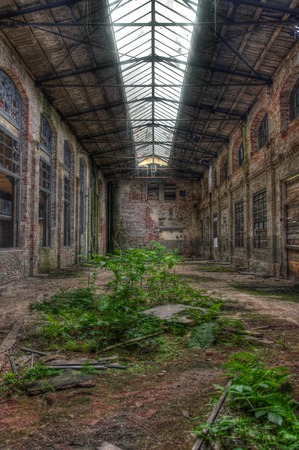 abandoned warehouse: Plants in an abandoned warehouse Stock Photo