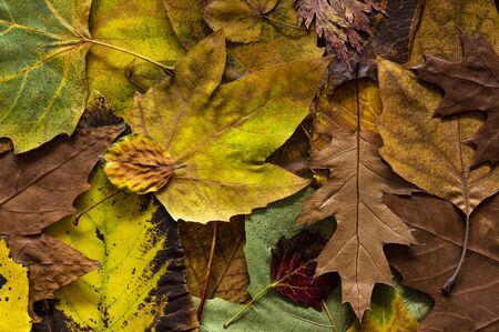 Fallen, colorful, autumn leaves background