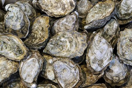 Close up on bunch of oysters